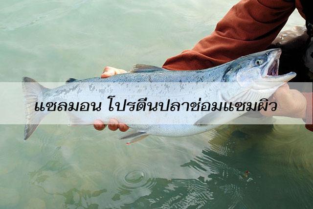 แซลมอน-โปรตีนปลาช่อมแซมผิว