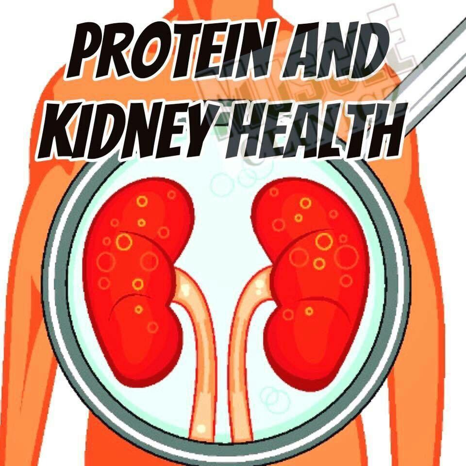 ผลของการทานโปรตีนเยอะกับสุขภาพไต 1