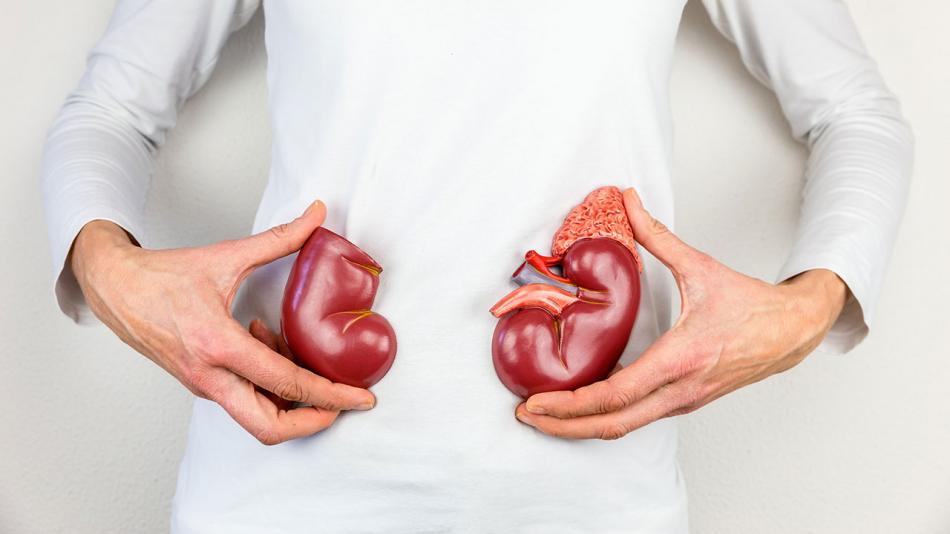 ผลของการทานโปรตีนเยอะกับสุขภาพไต 2